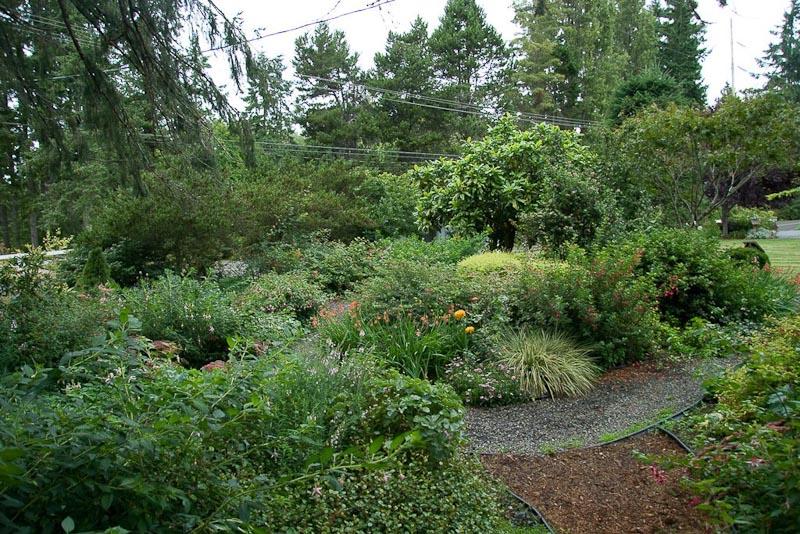 Fuchsia Display Gardens Of The Pacific Northwest